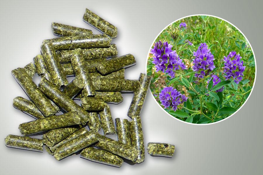 Entretien de pelouse - Traitement à la luzerne